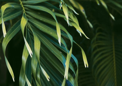 palm-trees-leaves